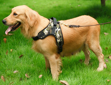 Load image into Gallery viewer, Safety Dog Harness