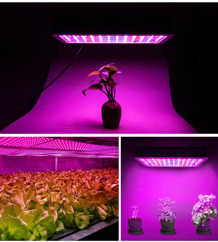 LED Grow light for indoors