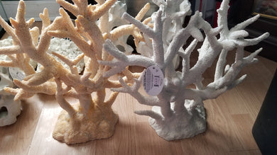 Staghorn Coral Large 17x9x17