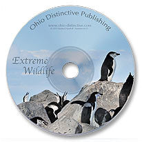 Extreme Wildlife DVD