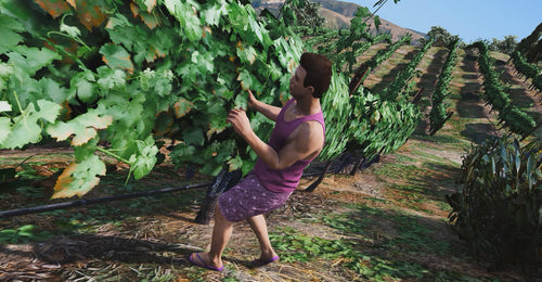 Vineyard Job | Winemaking