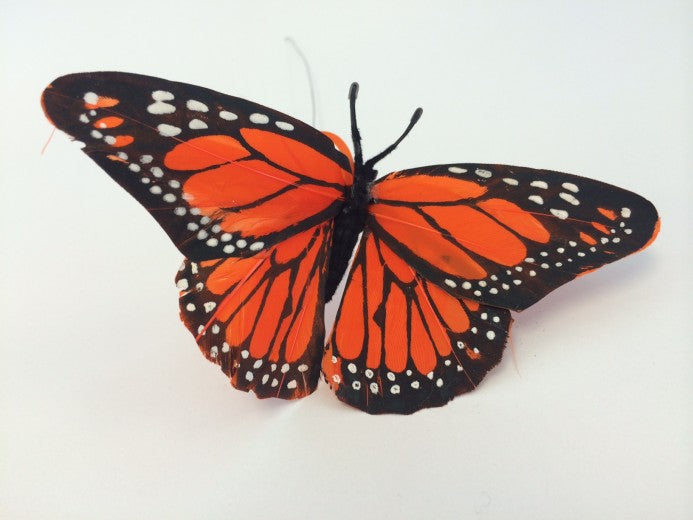 Orange Monarch butterfly