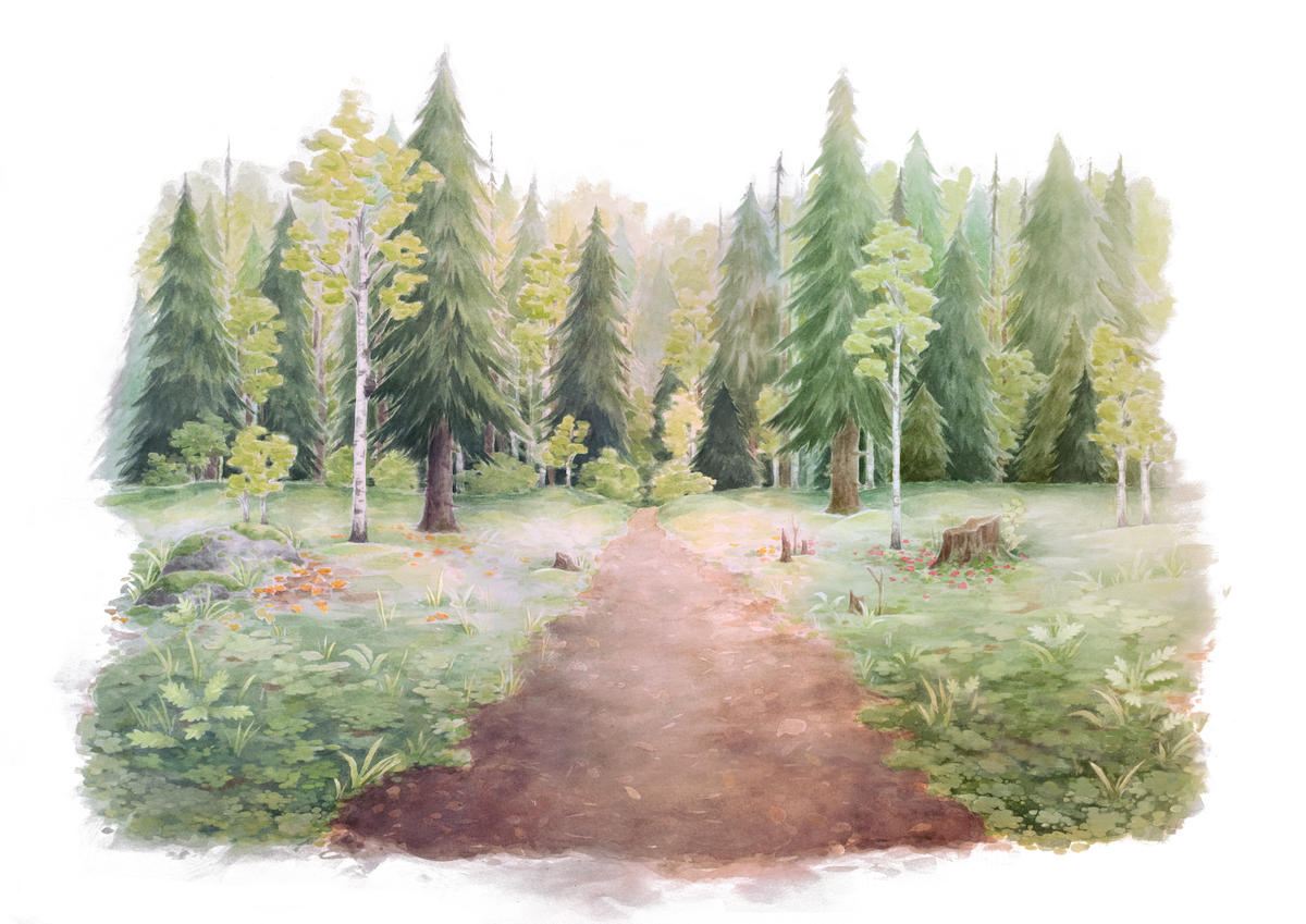 Natural Nordic forest of story
