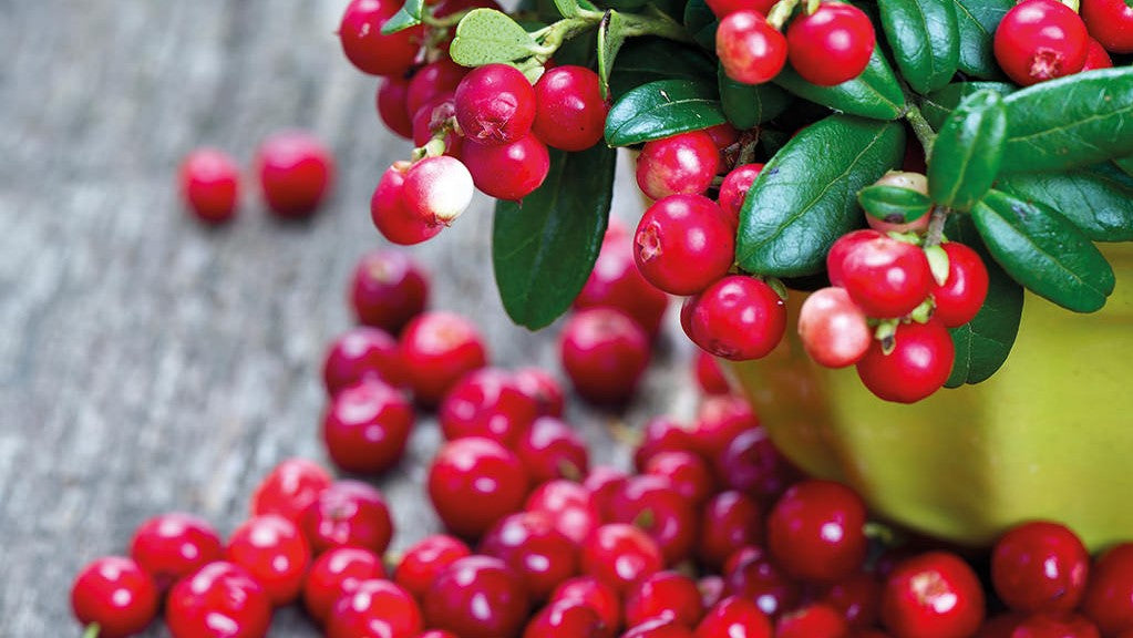 Natural Nordic Lingonberries