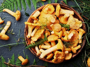 Natural Nordic fresh Chanterelles