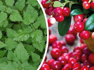 Natural Nordic fresh Nettle and Lingonberries