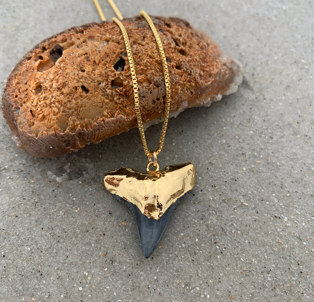 970-Shark Tooth Necklace