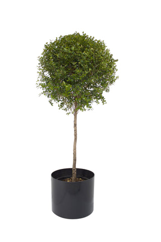 Single Ball Topiary