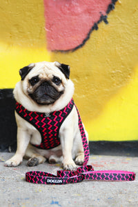 OG Bloom Reversible Dog Harness