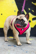 Load image into Gallery viewer, OG Bloom Reversible Dog Harness