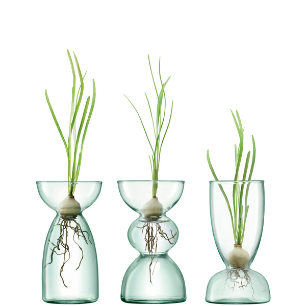 Trio of LSA-Eden Project sustainable, recycled glass vases.  Each has a narrow section, that can be used to support propagation of a bulb.  In each vase, a leafy green stem grows from the top and roots are visible growing into the water below.