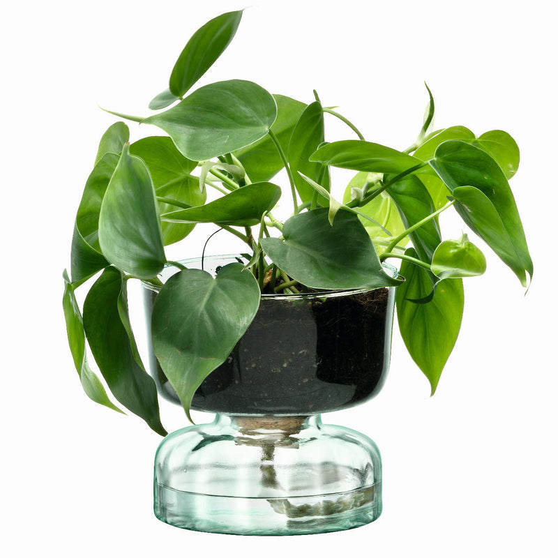 products/CQ15-G1579-LSA-Canopy-Eden-self-watering-recycled-glass-planter-vase-3.jpg