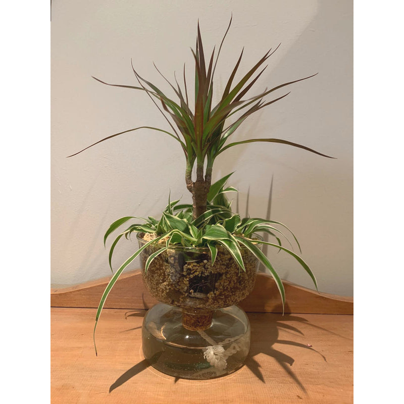products/CQ15-G1579-LSA-Canopy-Eden-self-watering-recycled-glass-planter-vase-Planted-Square.jpg