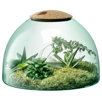 Recycled glass terrarium in a globe shape, with flat bottom and cork lid.  Inside is a selection of green succulents.