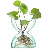 LSA-Eden Project recycled glass diabolo-shaped vase from the canopy range.  Contains a leafy green plant with roots visible in the water.