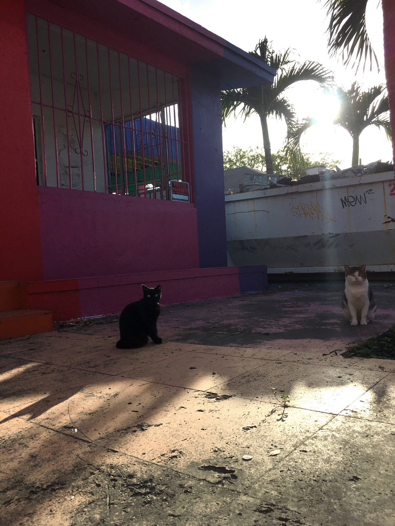 Cats in Wynwood, Miami