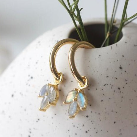 Cornflower Hoops - Gold