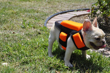 Load image into Gallery viewer, 5 Pads w/ Spikes -Hawk and Coyote Deterrent Vest For Dogs- LEVEL 5.0 PROTECTION