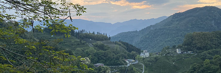 Alishan High Mountain tea country in central Taiwan at dawn