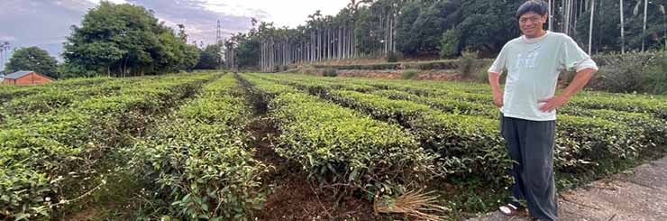 Eco-Farmed Special Roast Oolong Tea farm