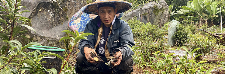 Edan, farmer of Eco-Farmed High Mountain Oolong Tea