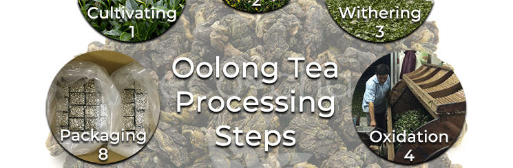 Oolong tea processing steps