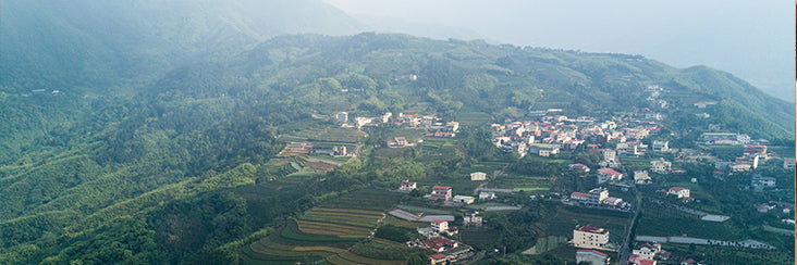 The Basic Facts Behind The Reclamation Of Dayuling Tea Farms