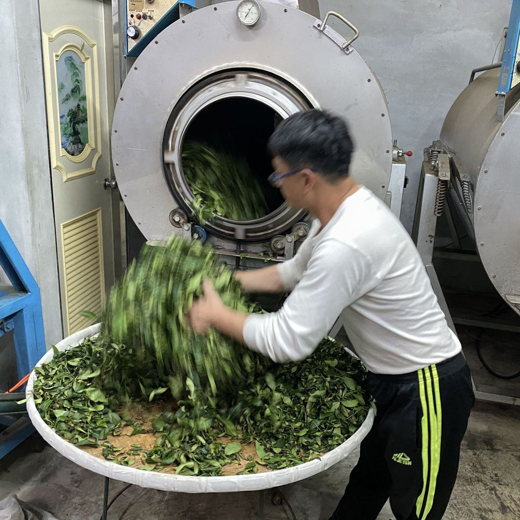 Traditional Dong Ding Oolong Tea making - tumble heating