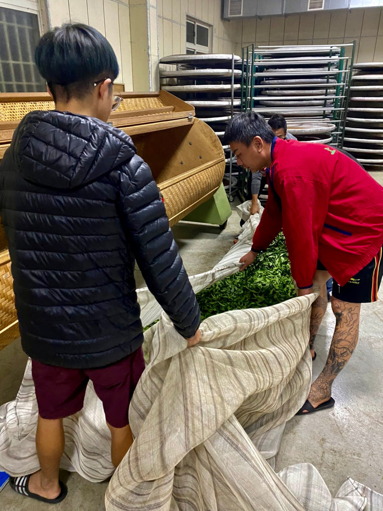 Li Shan High Mountain Oolong Tea processing: Tumbling