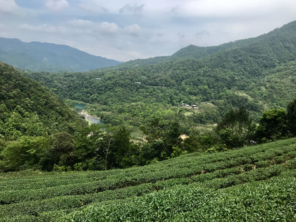 Pinglin Tea Farm