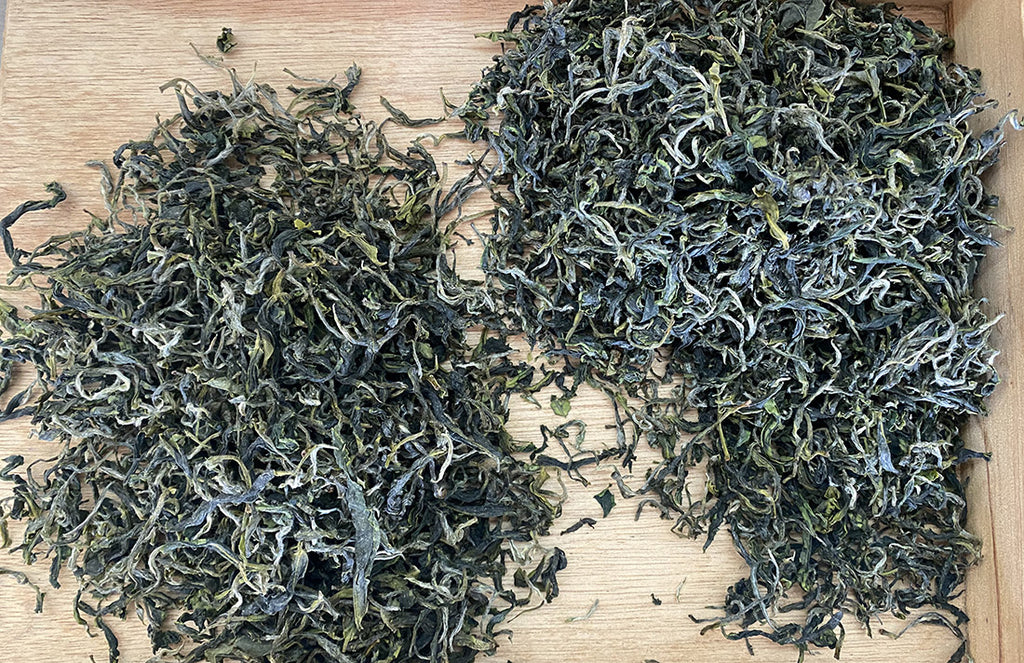 Bi Luo Chun Tea dry leaves from early spring harvest