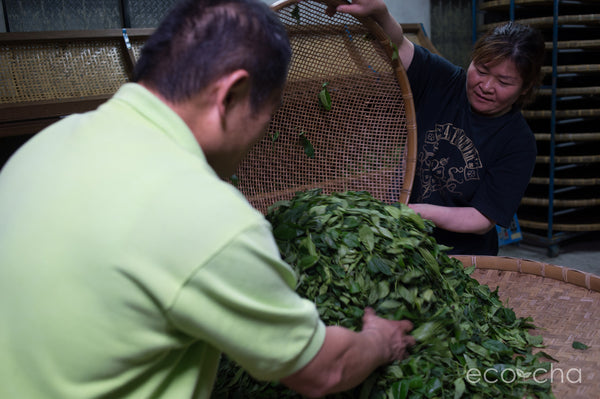 Our friends of twenty years, Mr. and Mrs. Chen working side by side in their tea factory.