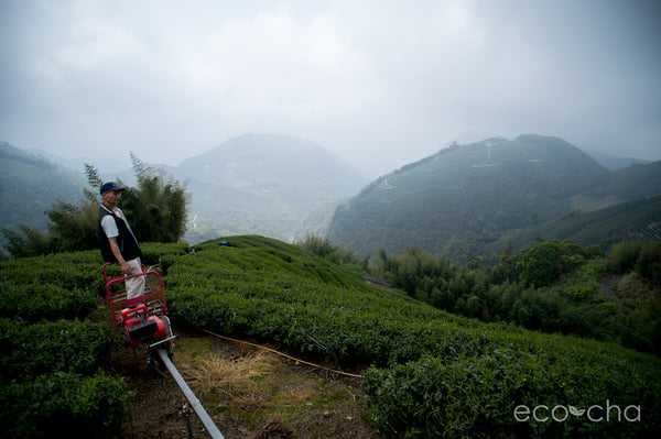 Shanlinxi tea small-scale tea farmer, Mr. Su, riding his monorail, maintaining his tea garden.