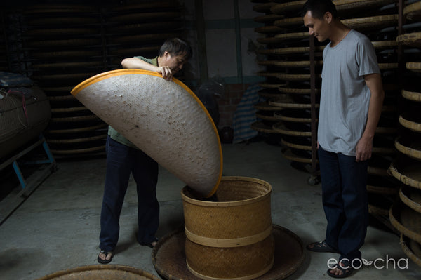 Dong Ding Oolong Farmer, Young, and his nephew roasting Oolong Tea.