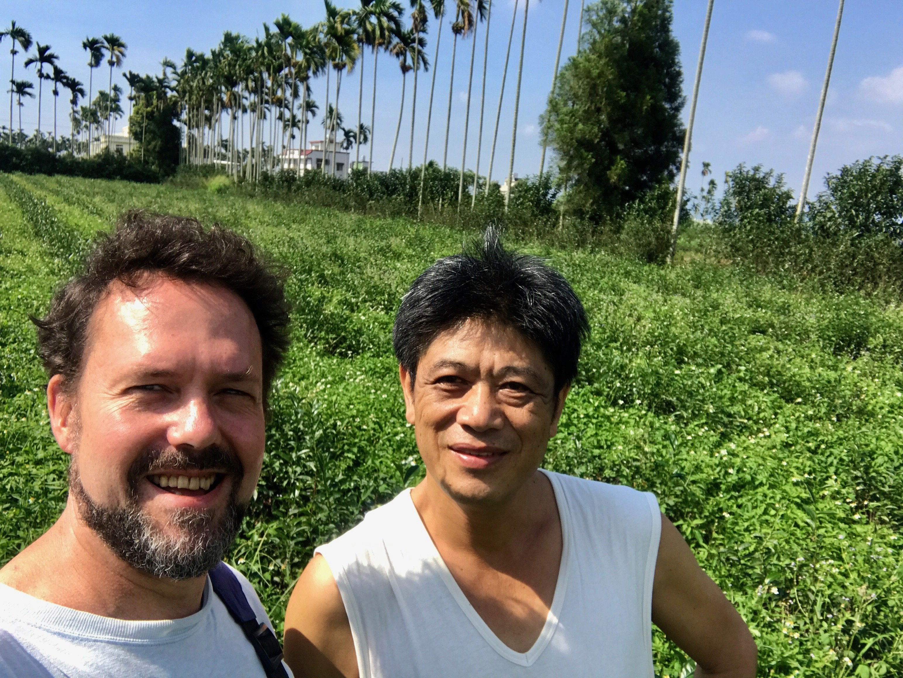Eco-Cha with Mr. Xie on his Eco-Farmed plot of Jin Xuan Tea