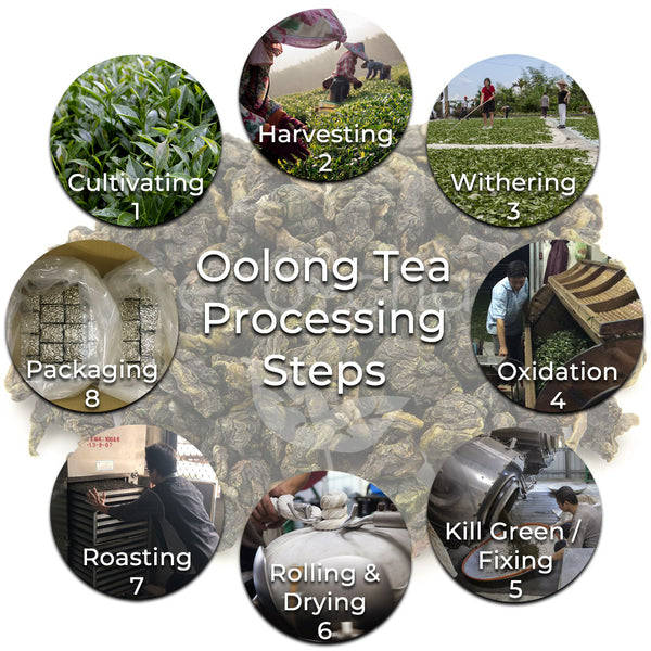 How oolong tea is made in Taiwan overview