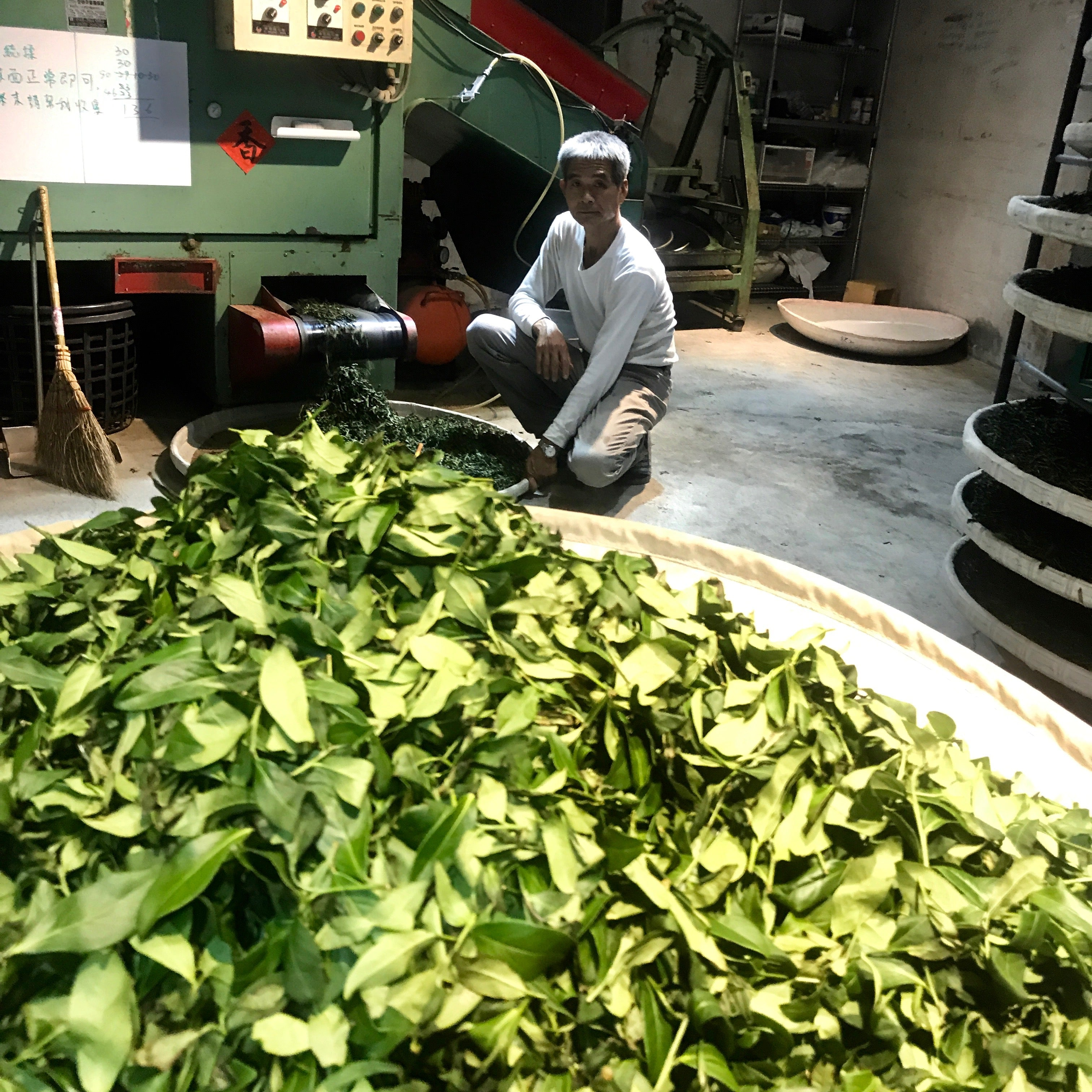 Small Batch Oolong Tea Production