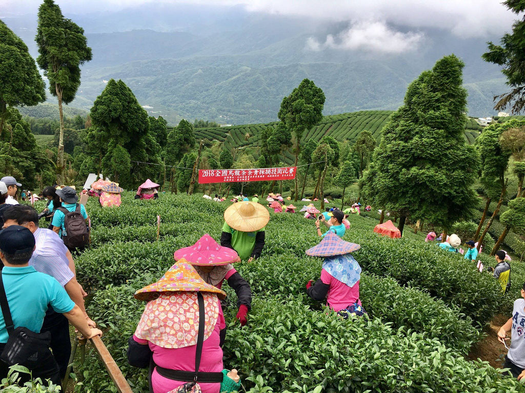 National tea-leaf picking competition in Taiwan