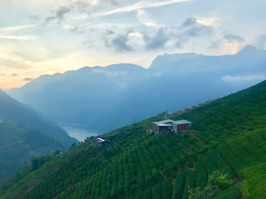 View from Eco-Cha's Lishan High Mountain Tea farm