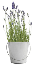 Load image into Gallery viewer, Garden-in-a-pail Lavender - Edwina Alexis