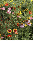 Load image into Gallery viewer, Wildflower Scatter Garden - Edwina Alexis