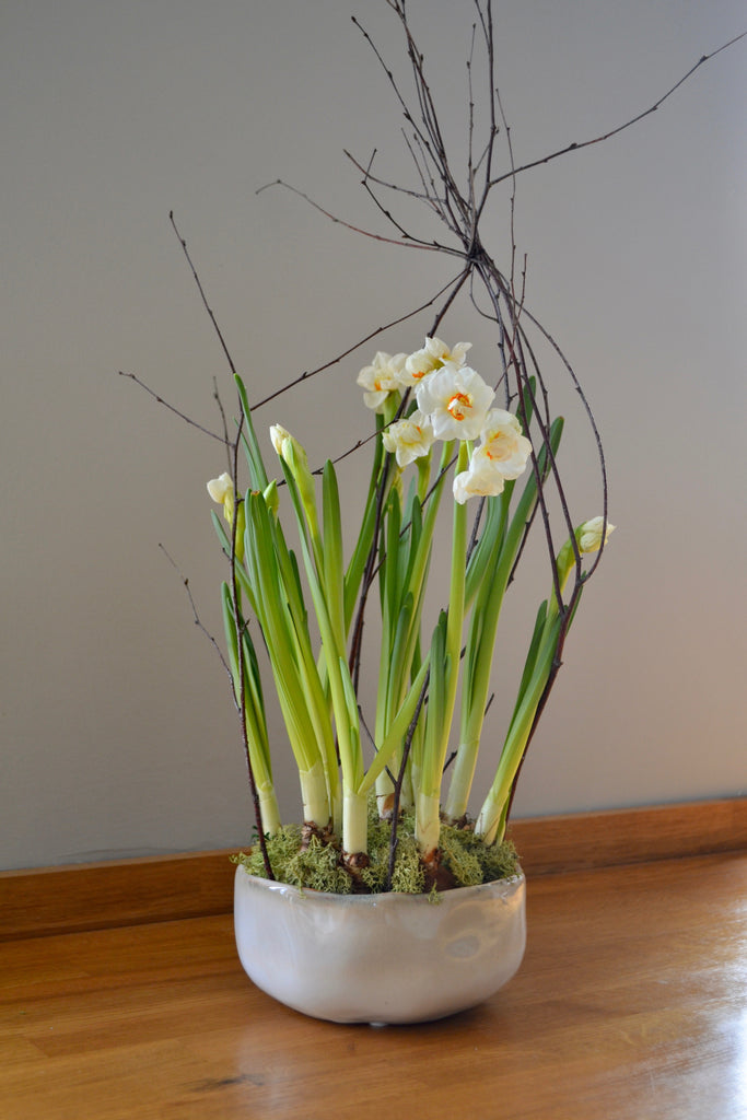 The 'Yvonne' Narcissi Planter