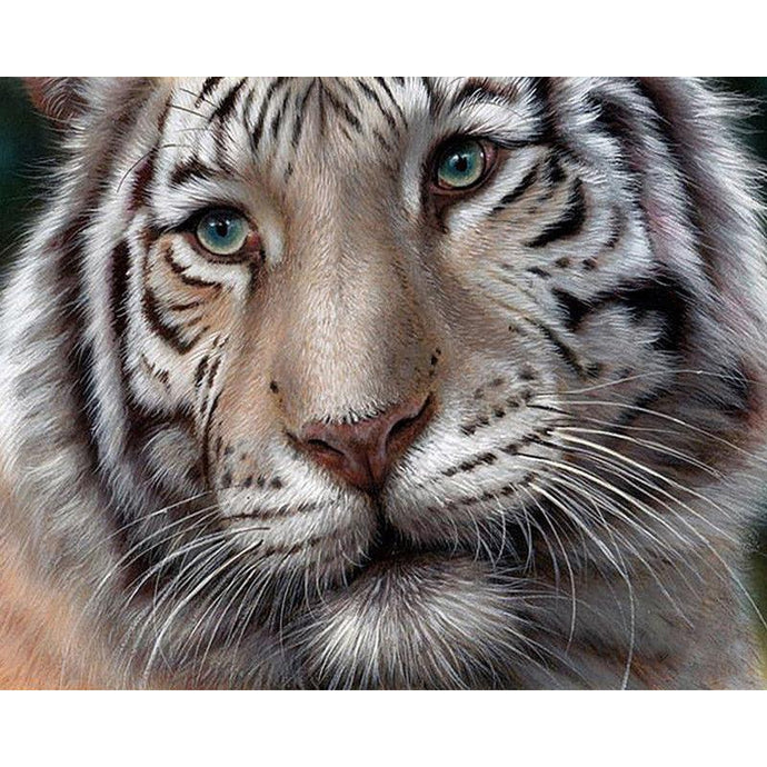 Beautiful White Tiger Face