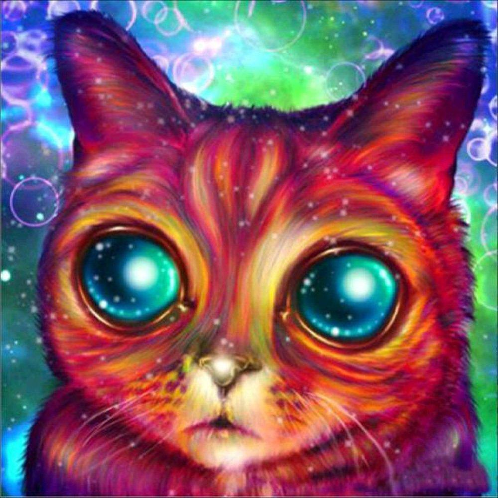 Big Eyed Colorful Cat