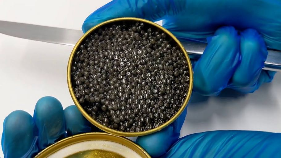 How to open a caviar tin