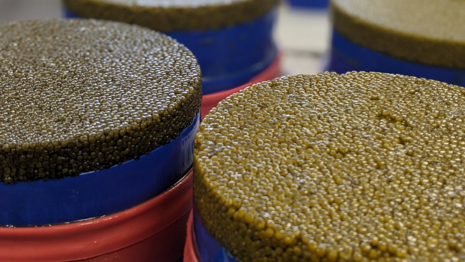 Caviar Counterfeiting and DNA testing