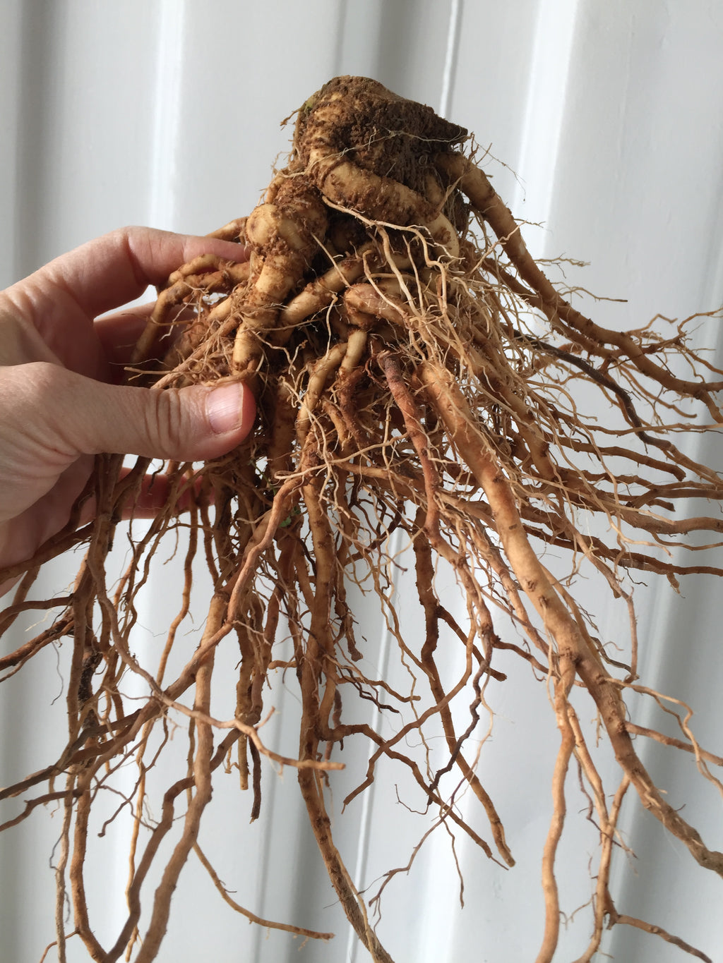 Medicine Maker Winter Share: Using Roots and Barks