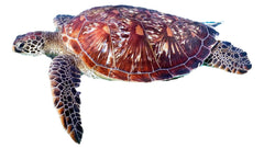 Donating to Ocean Causes Via Sales of Save Ocean Jewelry, Turtle Jewelry, Turtle Bracelets, Turtle Necklaces, Turtle Rings