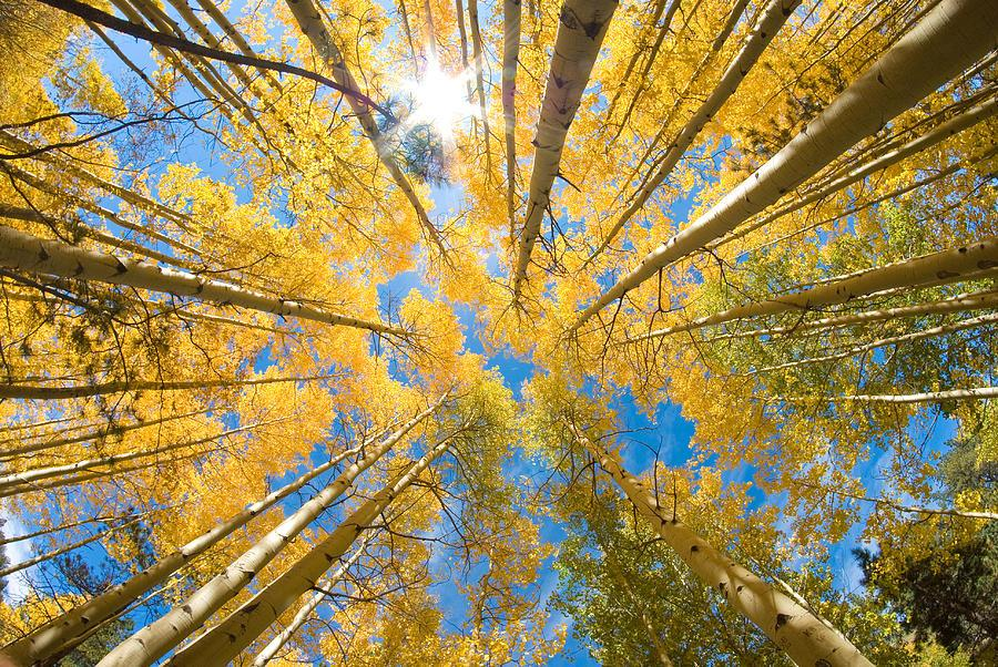 Best Fall Foliage Hikes in the Pikes Peak Region of Colorado