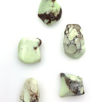 Lemon Chrysoprase (1) Tumbled Stone